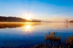草茎细节在一个湖的与破晓的太阳的不可思议的早晨时间的 库存照片