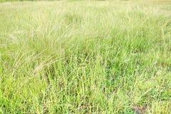 草草甸 库存图片