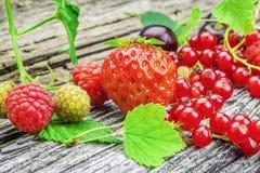 草莓、莓、樱桃和红浆果与叶子 库存照片