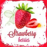 草莓传染媒介水彩 免版税库存图片