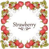 草莓卡片  免版税库存照片