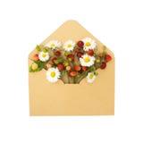 草莓和春黄菊信封 库存照片