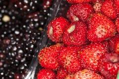 草莓和黑莓背景 前景接近的宏指令 免版税库存图片