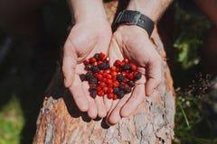 草莓和黑莓 库存图片