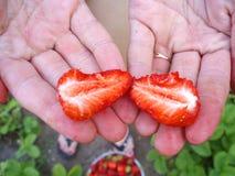 草莓在别墅的手上 草莓季节 免版税库存图片