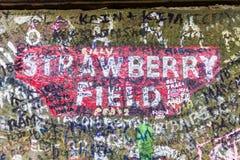 草莓在比肯斯菲尔德路的领域门在Woolton,利物浦 库存照片