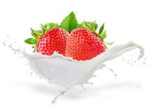 草莓在白色背景的牛奶飞溅 库存照片