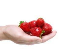 草莓在白色背景隔绝的人的手上 库存照片