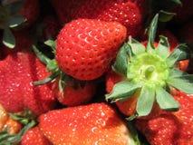 草莓在苗栗台湾 免版税库存照片