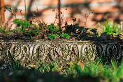 草莓增长的质地边石在庭院里 绿色 库存图片