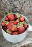 草莓庄稼 库存照片