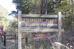 草莓抱怨Audubon中心 库存图片