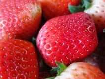 草莓接近的射击 图库摄影