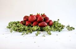 草莓时间 免版税库存照片