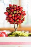 草莓树 库存照片