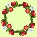 草莓框架与绿色叶子的 免版税图库摄影