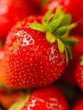 草莓特写镜头宏指令 免版税库存照片