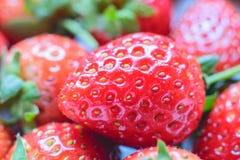草莓甜点 新鲜的草莓 红色strewberry 免版税库存图片