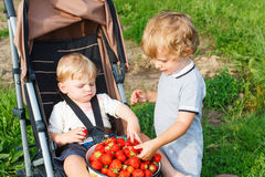 草莓的两个小兄弟姐妹小孩男孩在夏天种田 库存图片