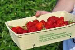 草莓的域 免版税库存照片