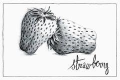 草莓的手拉的黑圆珠笔例证与手写的 向量例证