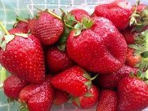 草莓红色在春天 库存照片