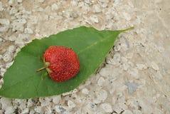 草莓红色 库存照片