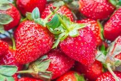 草莓纹理背景 库存图片
