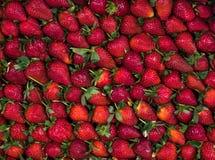草莓背景 库存图片