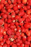 草莓背景 免版税库存照片