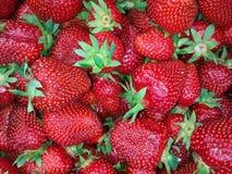 草莓背景 图库摄影