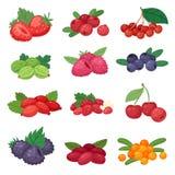草莓蓝莓莓黑莓和红浆果例证berrylike集合的莓果传染媒介berrying的混合 库存例证