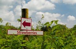 草莓路标 免版税库存图片