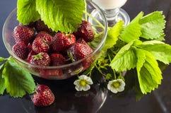 草莓酸奶用在黑暗的背景的草莓 免版税库存照片
