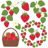 草莓集合 免版税库存照片