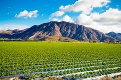 草莓领域和山 免版税图库摄影