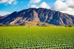 草莓领域和山 免版税库存照片