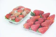 草莓食物农业被隔绝的模子可口健康果子圣保罗巴西 免版税图库摄影