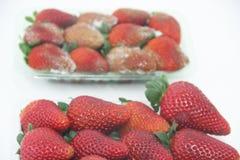 草莓食物农业被隔绝的模子可口健康果子圣保罗巴西 免版税库存图片
