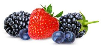 草莓,黑莓,越桔,在白色隔绝的蓝莓 免版税图库摄影