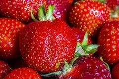 草莓, 免版税库存图片