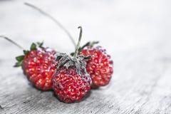 草莓04 图库摄影