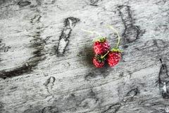 草莓01 库存图片