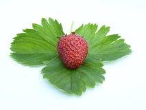 草莓01 免版税库存图片