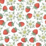 草莓collestion 2-02 免版税图库摄影