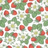 草莓collestion 2-03 库存图片