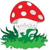 草蘑菇 库存图片