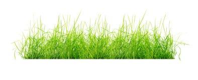 草被隔绝的丛 库存图片