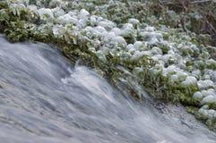 草覆盖与冰在The Creek 库存照片