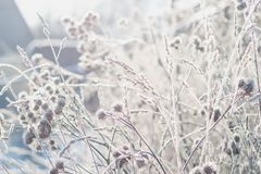 草覆盖与树冰以冬天早晨太阳为背景 免版税图库摄影